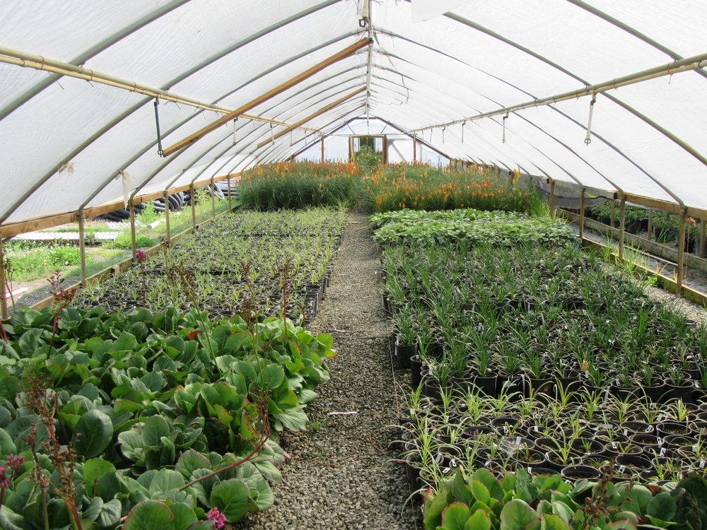 Brandywineis a 140-acre Wholesale Nurseryin Mount Vernon, Washington. -