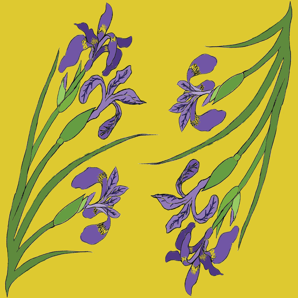 Iris pattern section.jpg