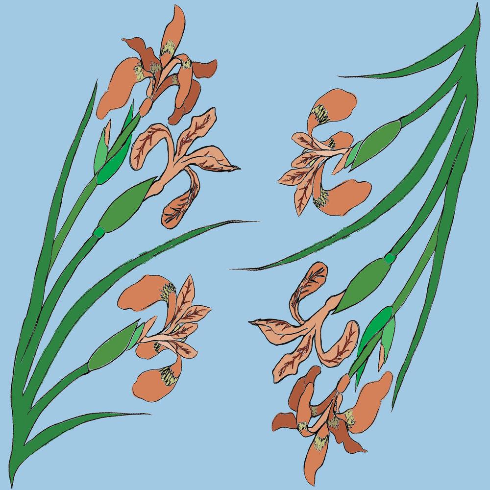 Apricot iris pattern section.jpg