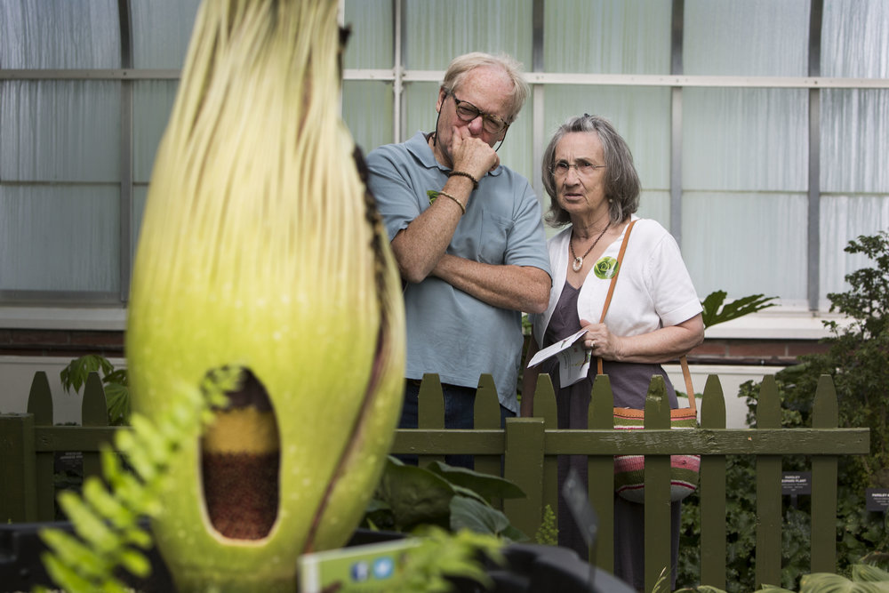 Walt and Rozy Burton, members of the botanical gardens, wait to see Morty in full bloom.