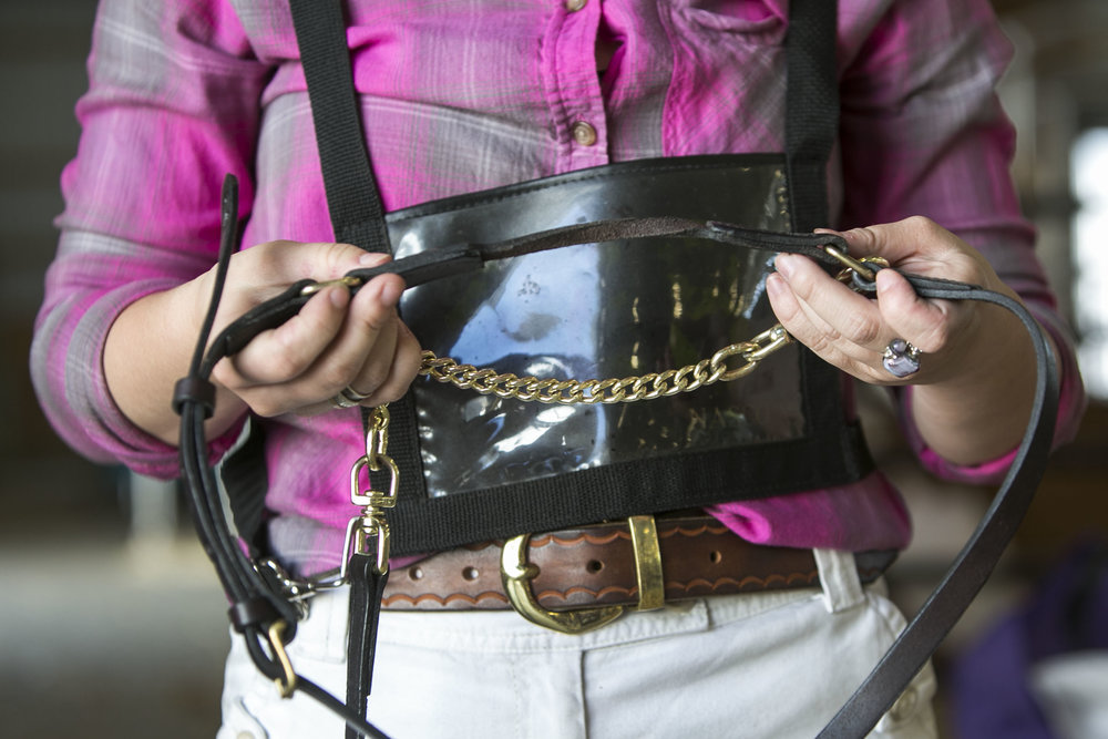 Brooklyn puts a halter on her heifer named Surprise before going out for a walk.