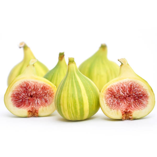 tiger figs, the inspiration for the stylized version