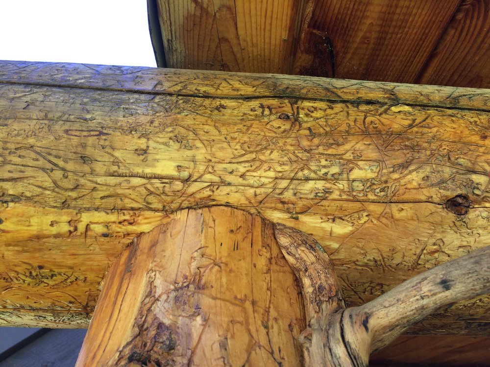wood worm patterns