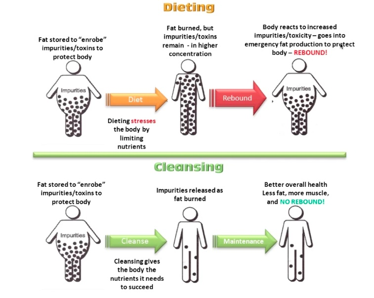 How detoxing works for weight loss vs how diets don't work