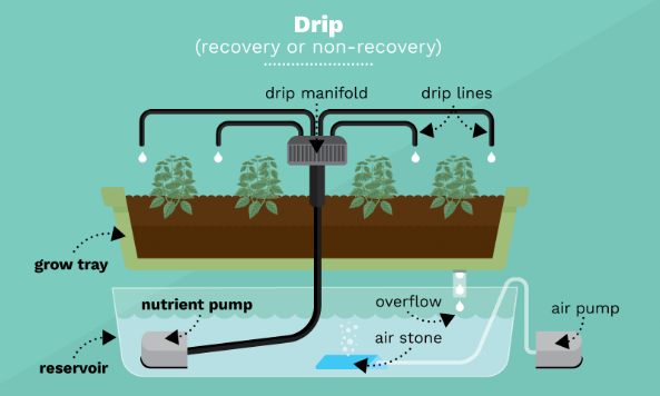 Image Credit:https://www.fix.com/blog/growing-food-with-hydroponics/