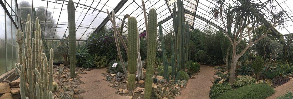 Green house at Dundee University's Botanical Gardens