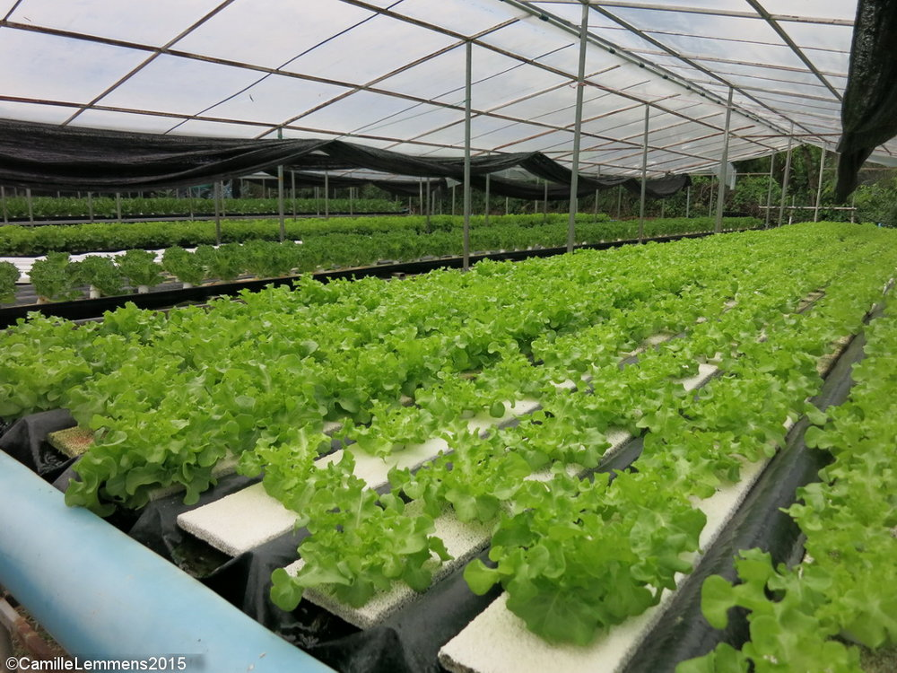 This hydroponic farm is an example of a 'yield' product