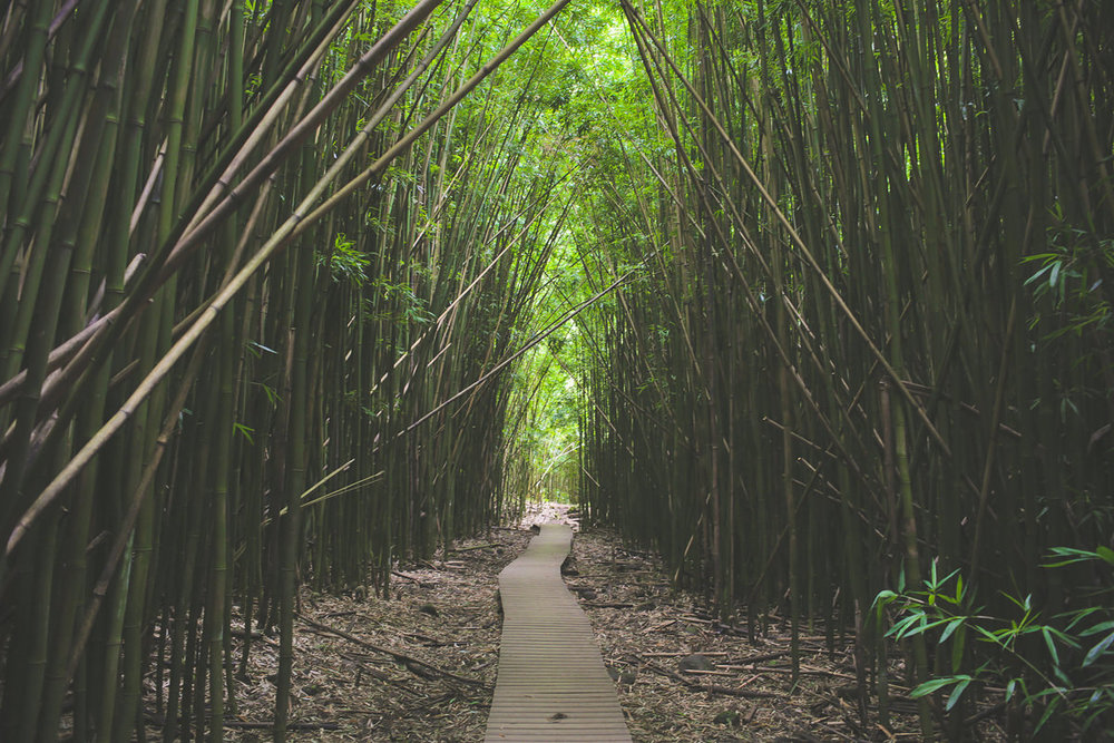 Waimoku Bamboo Boardwalk_JS.jpg