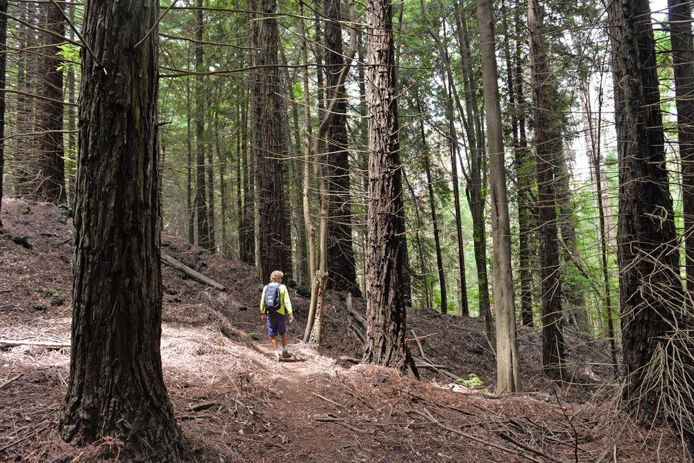 Hiking_Boundary Trail-4.jpg