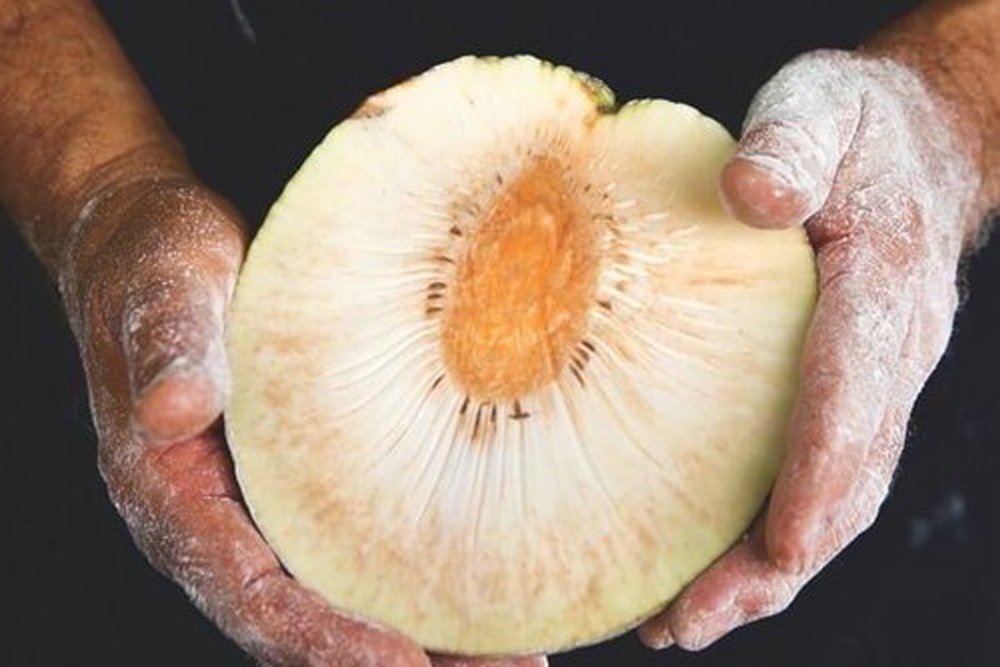 Bread From Breadfruit   As long as your flour is gluten-free, it must be healthy, right? Not exactly, says Hōkūao Pellegrino, a Maui farmer whose love of cooking—and his wife's autoimmune disease—got him researching different ways of making gluten-free flour…  read more
