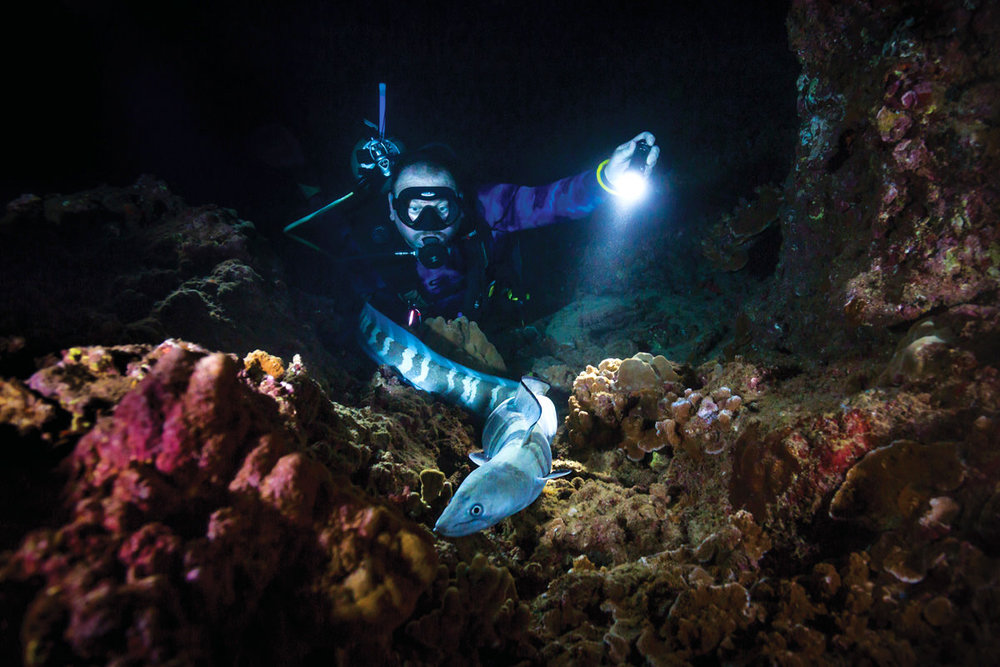 Pu'u Keka'a Night Dive   For those who are not afraid of the dark, this night dive reveals sea creatures you wouldn't see in the day …  read more