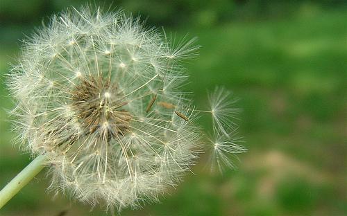 allergies-1.jpg