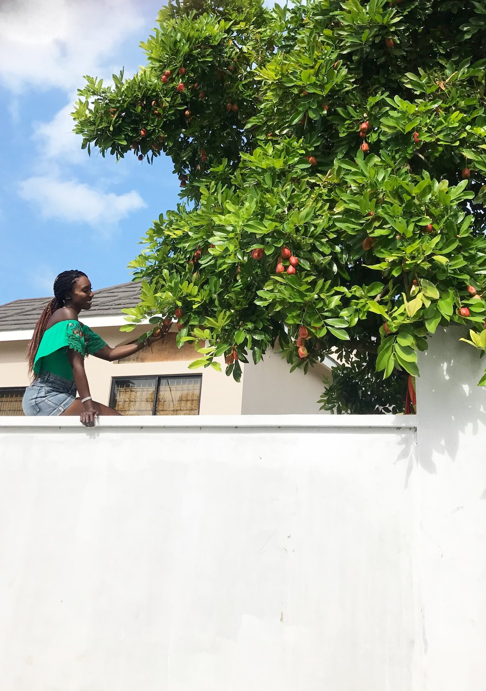 Picking-Fruit-Jamaica-Dayna-Bolden.JPG