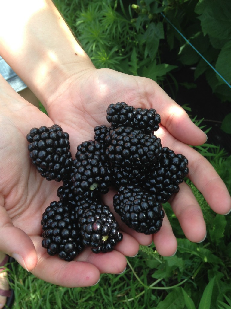 A handful of blackberries