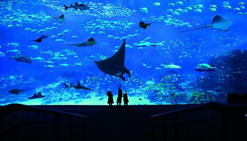SEA Aquarium.jpg