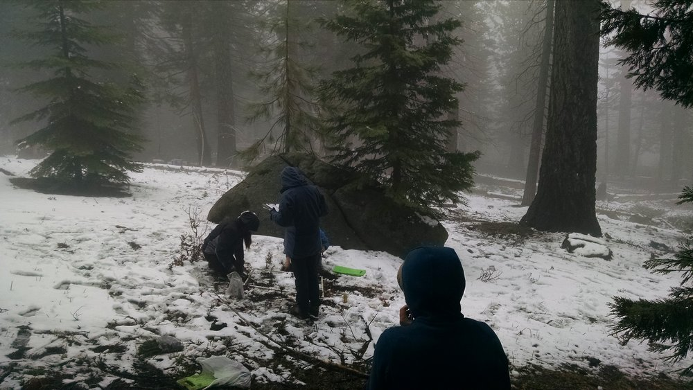 Yosemite field work. PC: Jeff