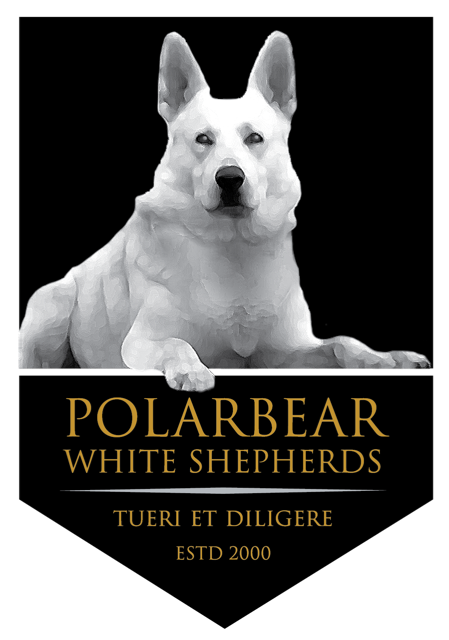 White German Shepherd Dogs & Puppies | Polarbear