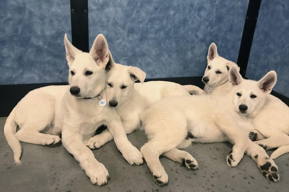 Enjoying our Petsmart Puppy Class!