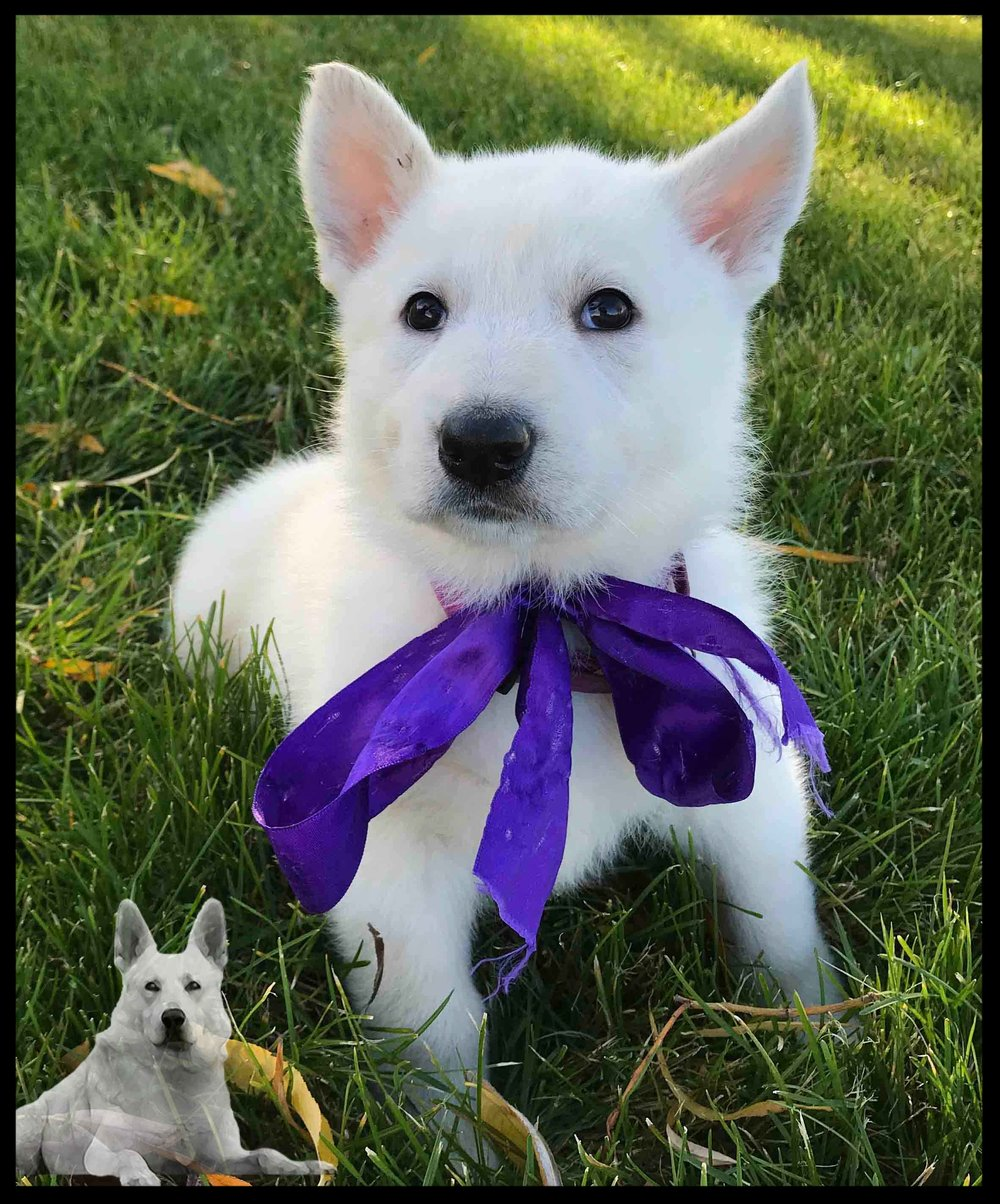 PICK PUPPY:  Purple Female