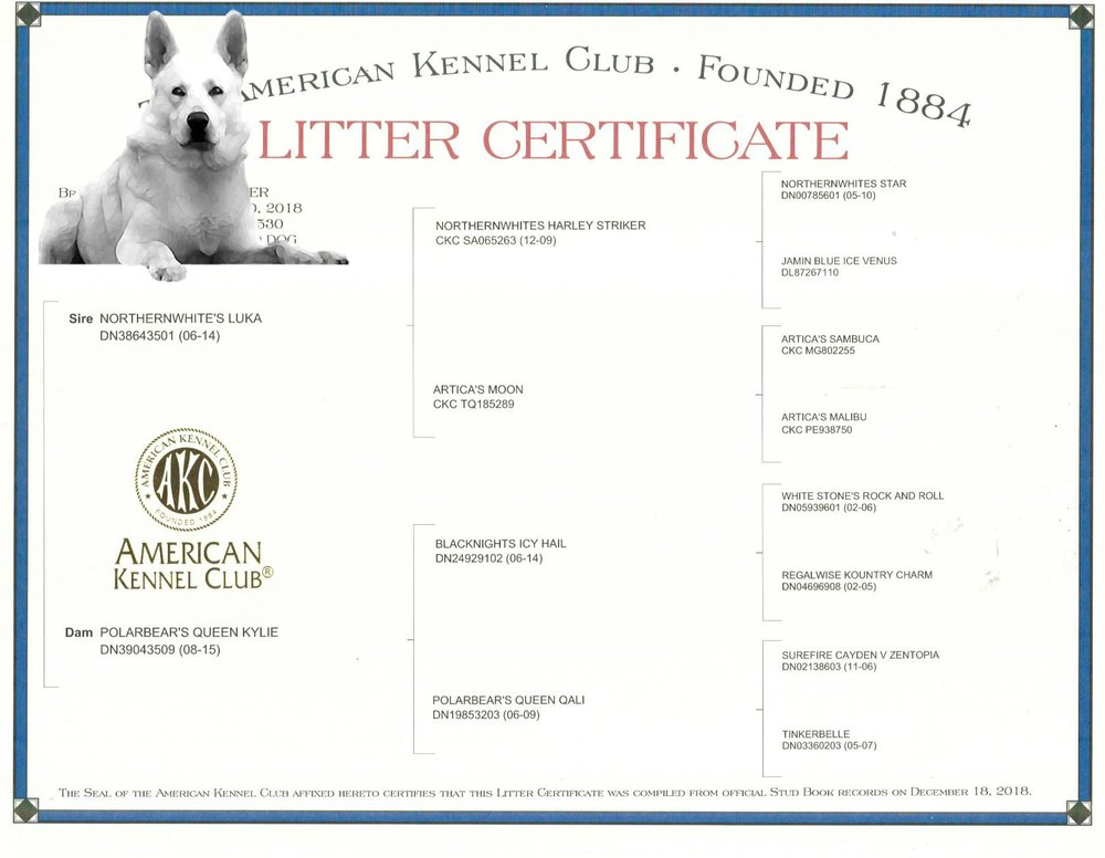 Puppy Pedigree and American Kennel Club Litter Registration Certificate