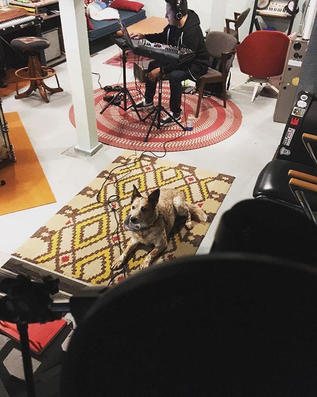 Today I was herded into the vocal booth until I finished vocals for the new album. Mission accomplished! Good cattle dog. #cattledog #newalbum #portlandoregon #rockandroll