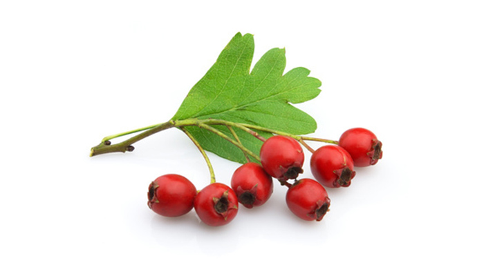 Hawthorn-Berry-image.jpg