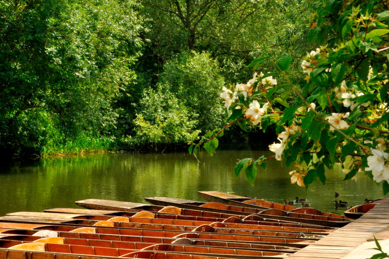Go punting and have tea at Cherwell Boathouse Terrace