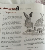 Blog post 2 photo #8 Hare article.jpg