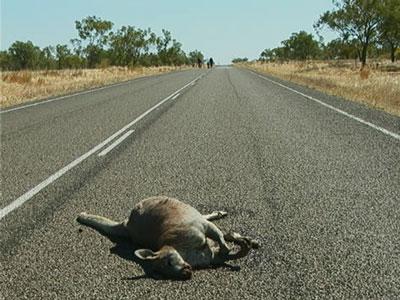 Kangaroo Karnage.jpg