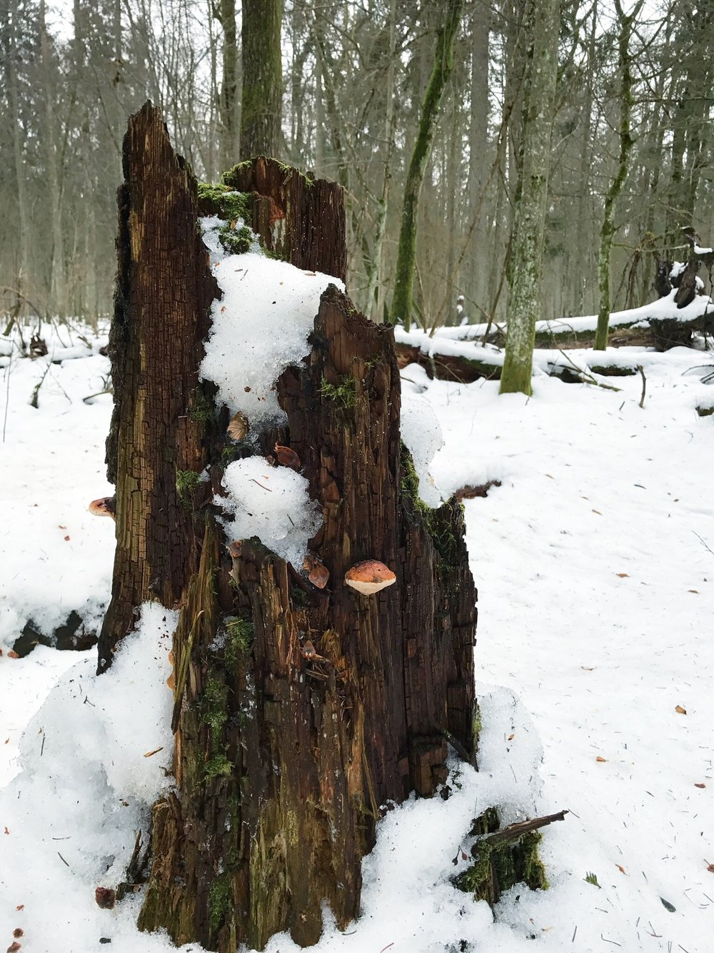 sump-and-fungus-bialowieza-forest.jpg