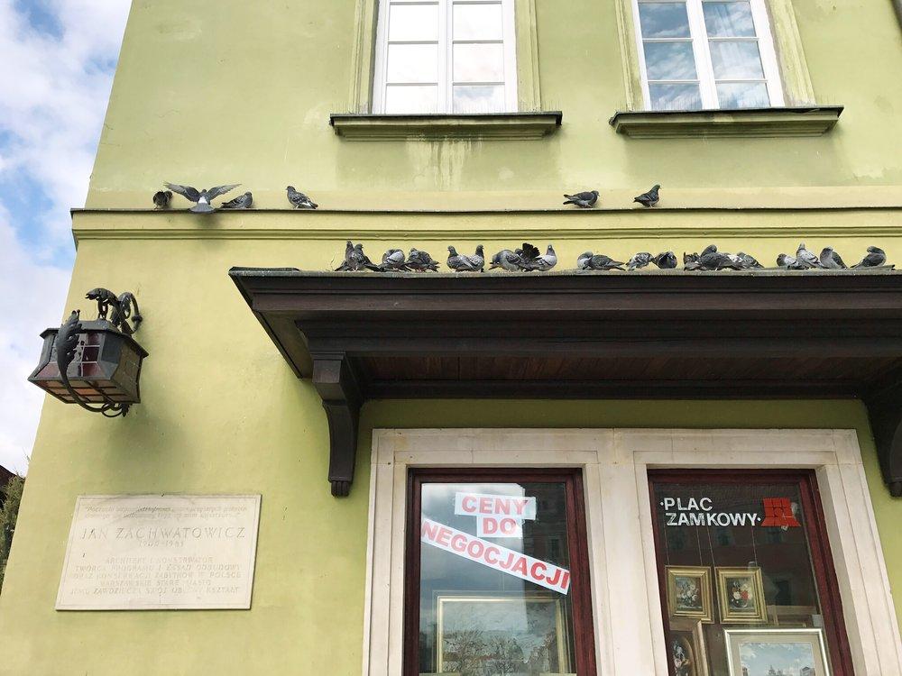 pigeons-in-warsaw.jpg