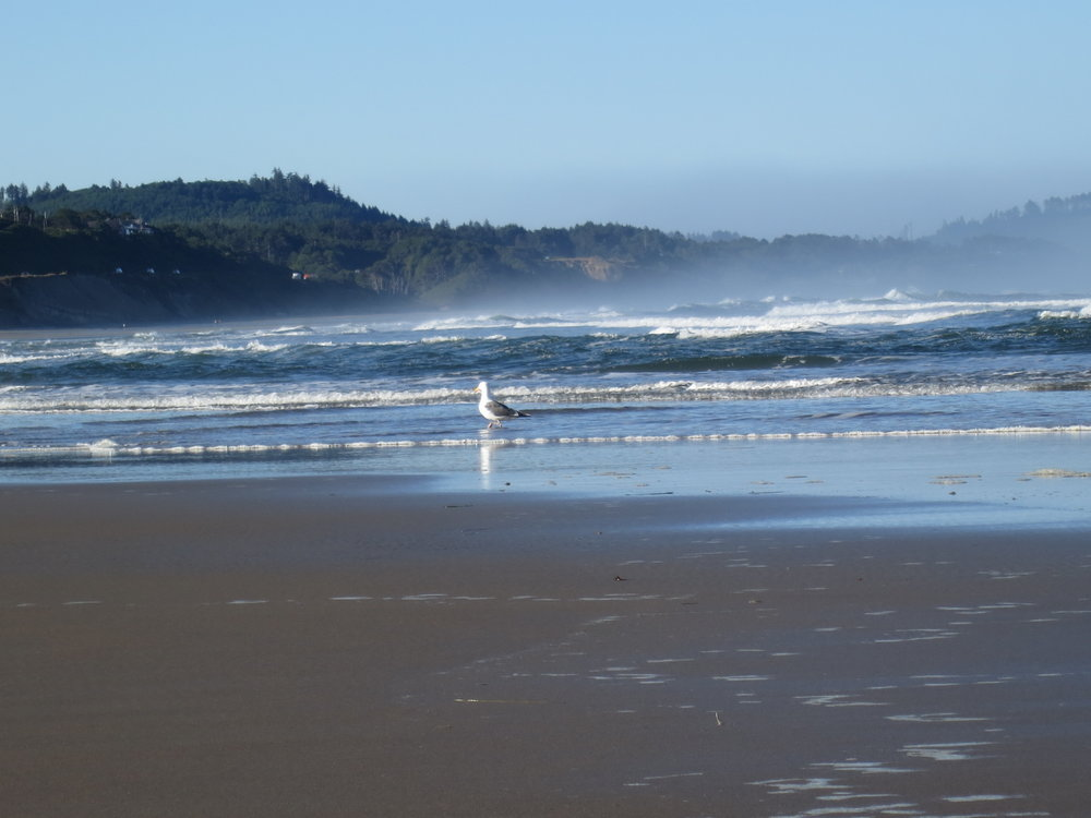 Seagull Along the Oregon Coast