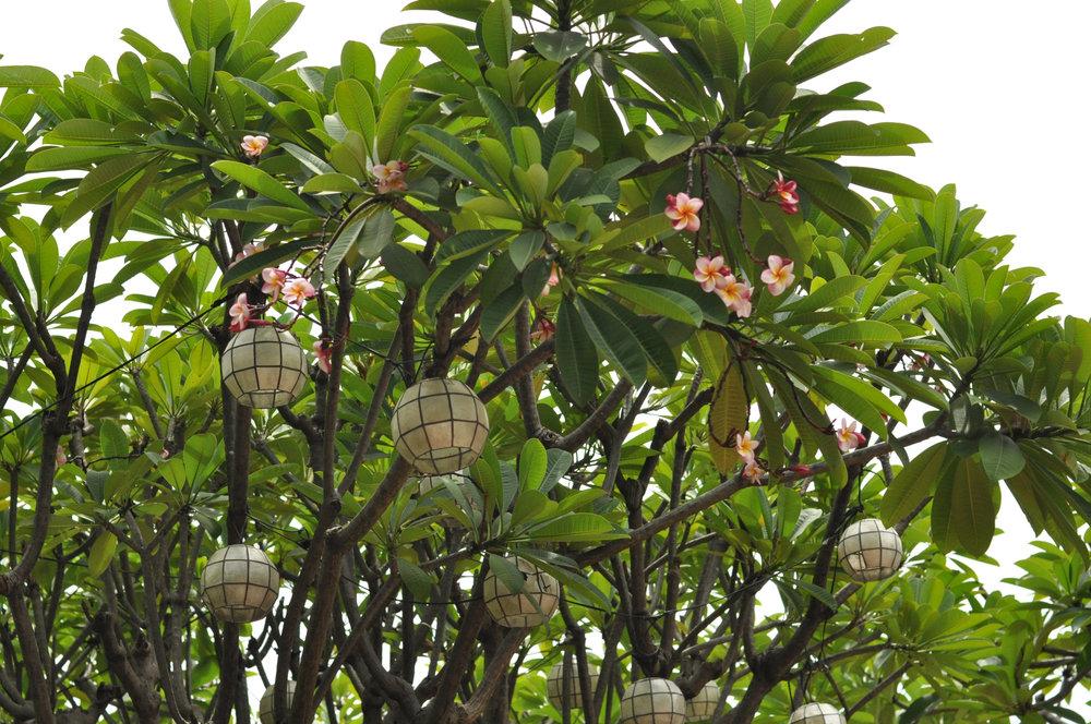 Hanging lights in Banyan trees outside Fort Santiago Intramuros, Manila, Philippines