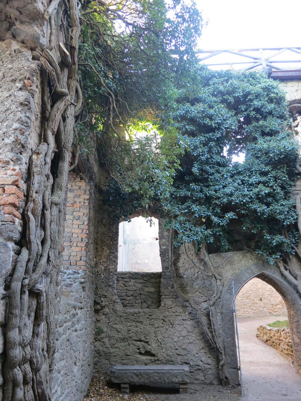 Chojnik Castle courtyard with climbing trees; Zamkowa, Jelenia Góra, Poland