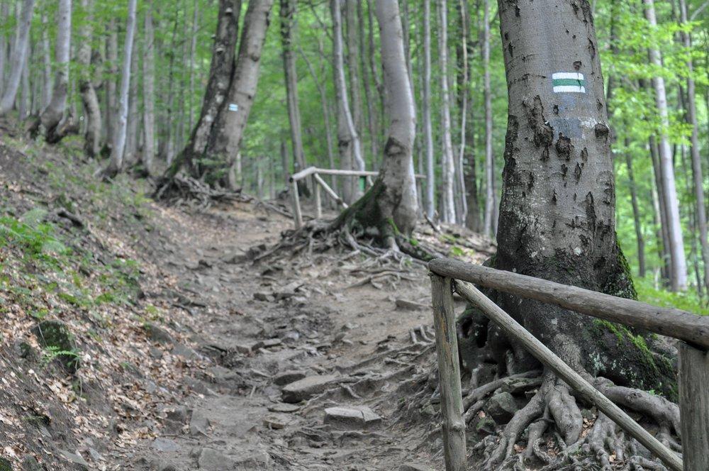The green trail towards Mała Rawka in the Bieszcady Mountains