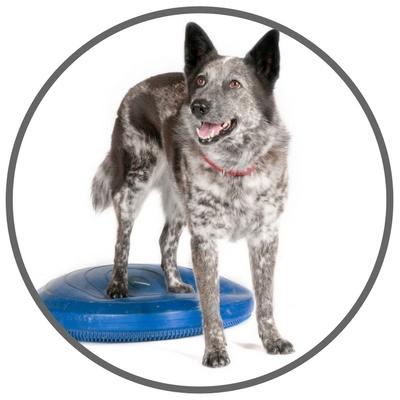 DogMotion-Bentley-Back-Feet-on-disc.jpg