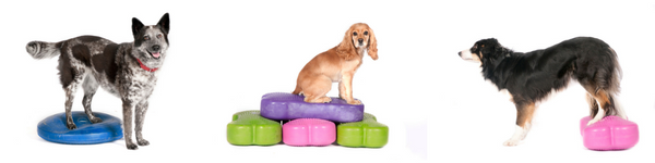 FitDogSocial-Midpagebanner2.png