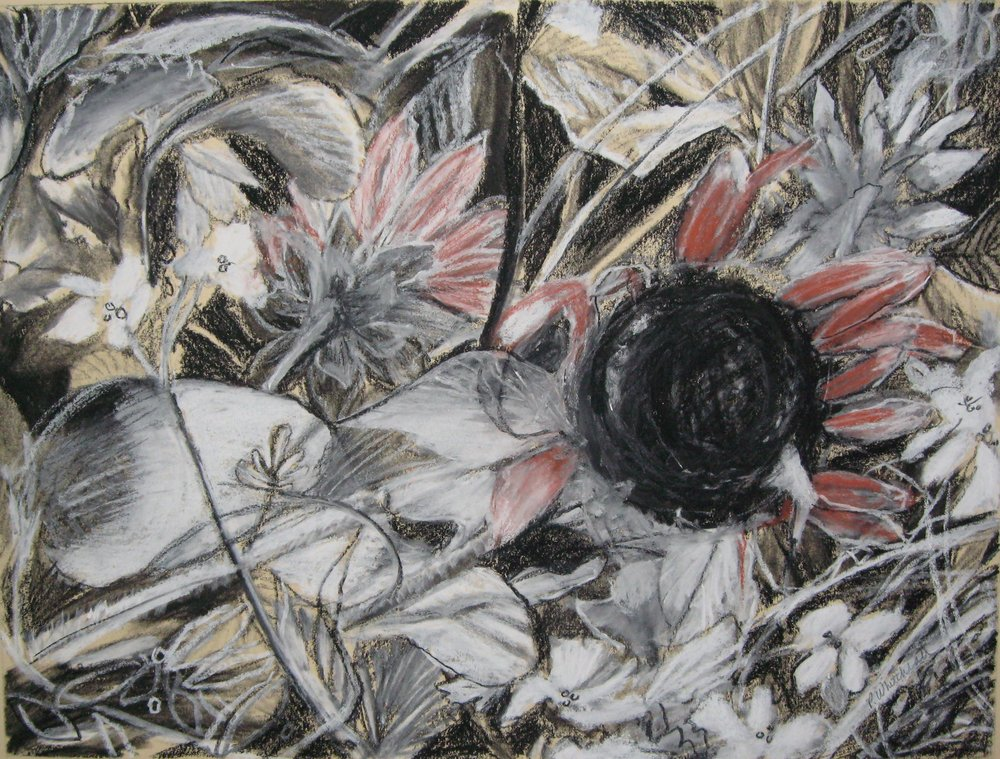 "Sunflower Field IV, 12 x 9"", conte on paper"