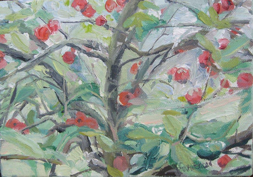 """Apples II, 7x5"""", Oil, (sold)"""