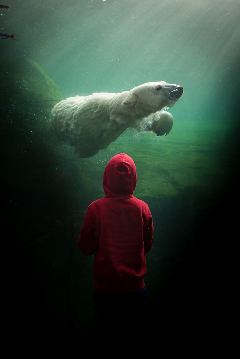 Sized Guest with Polar Bear by Grahm S. Jones for The Columbus Zoo and Aquarium
