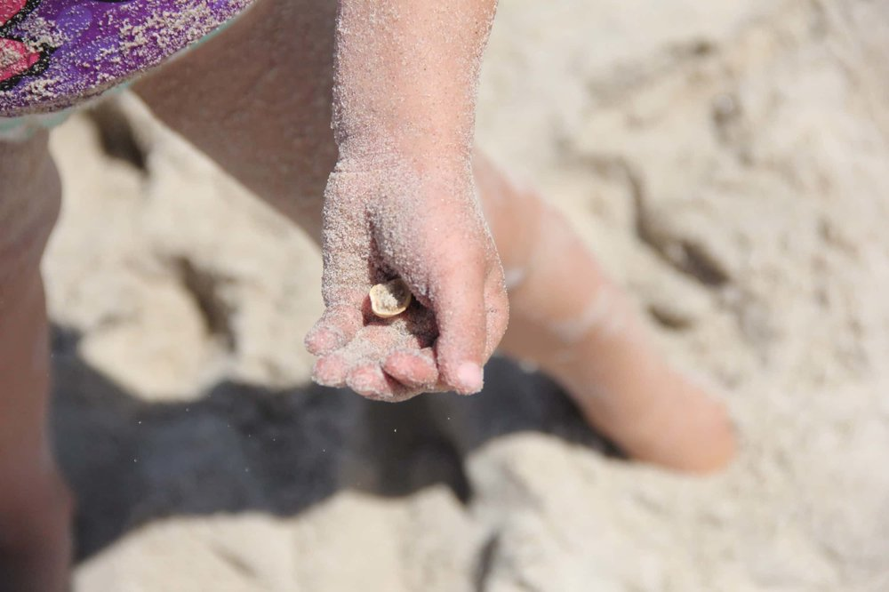 Collecting shells on the Assateague beach is another fun option with young children.
