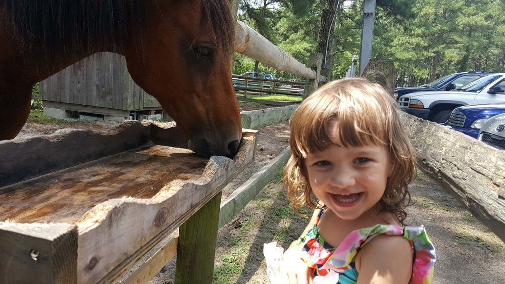 Someone is  very  excited to be face-to-face with a Chincoteague pony!