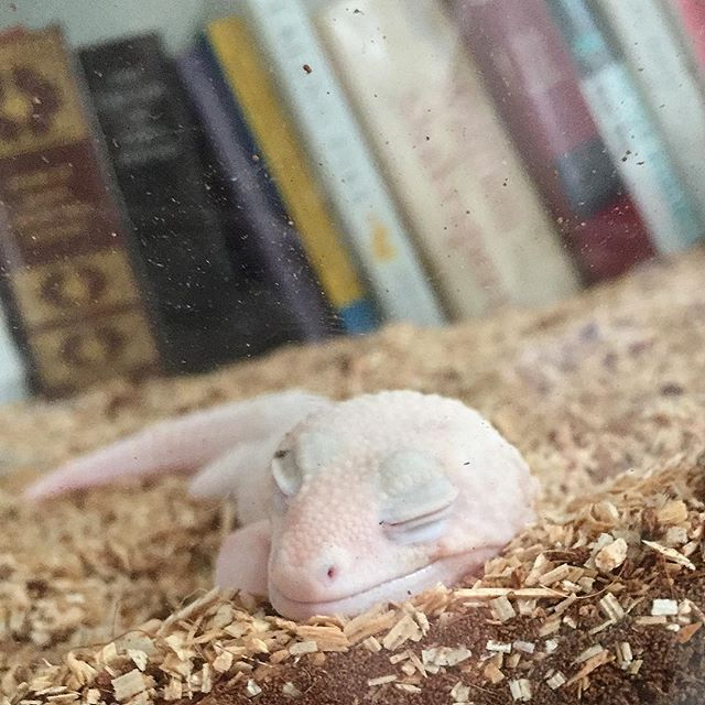 Dreaming of worm holes
