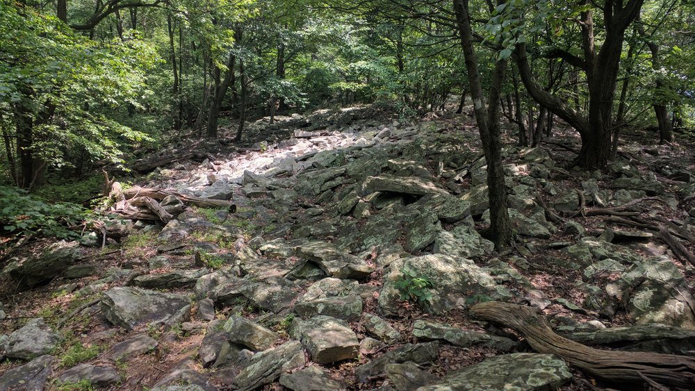 "This is field of rocks is literally the ""trail""."