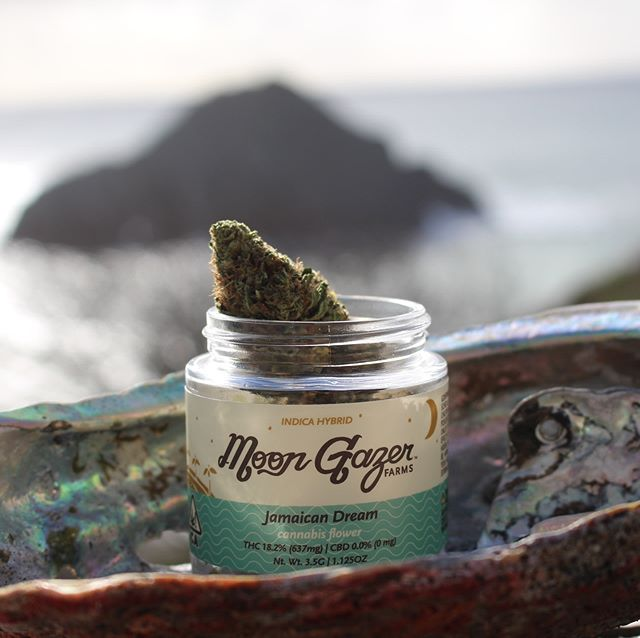 We're excited to announce our flowers are now available @emeraldpharms_ig in Hopland in our very own MoonGazer jars 🌙✨☀️ Also coming soon to @cannavine.ca Ukiah (grand opening is this Saturday!). It's been quite a journey to get to this point, no doubt. Legalization (Prop 64) has been a wild journey to navigate. They sure don't make it easy for small farmers. Nevertheless we are so grateful to be able to get #dempure #biodynamic Emerald Cup #awardwinning cannabis grown with love and intention to the people of California. Huge shoutout to @mendocinogroup for your beautiful work designing the labels and our family at @filigreendistro for connecting the dots and making it all happen. Big love and appreciation to all for your support. It means the 🌍 to us ✨❤️💚💛✨ #grownwithlove #moongazerfams #trustnature #cosmiccannabis #hugelkultur #permaculture #sungrown #seedsown #mendocino #regenerativecannabis