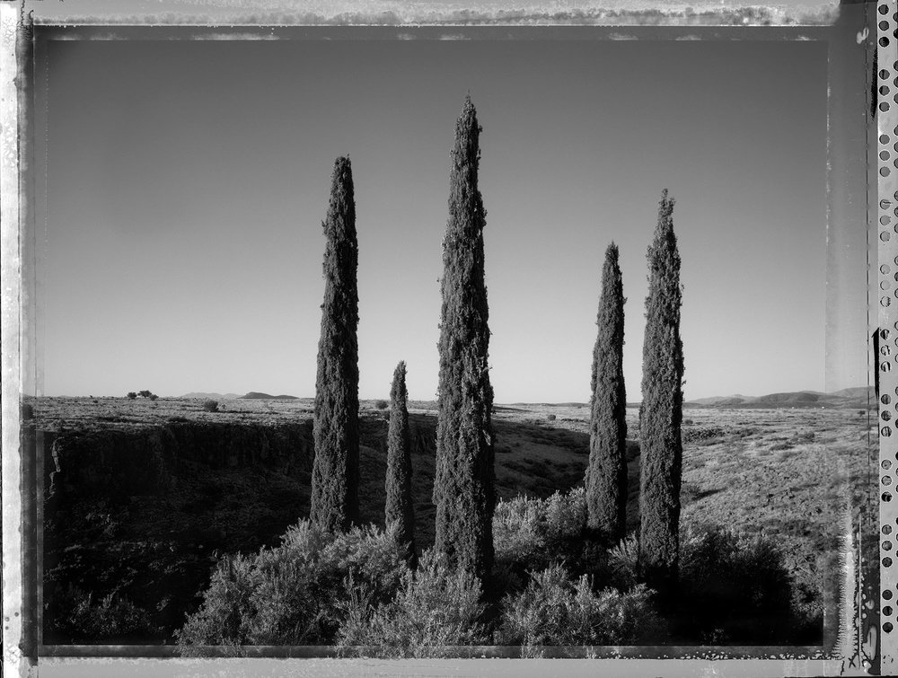 Arcosanti with Italian Cypress trees