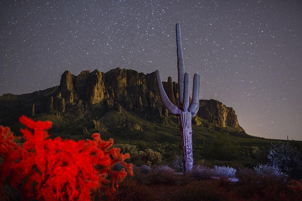 Saguaro and Cholla