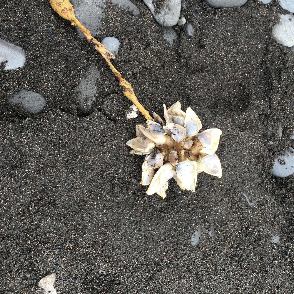"""Sea Flower"""