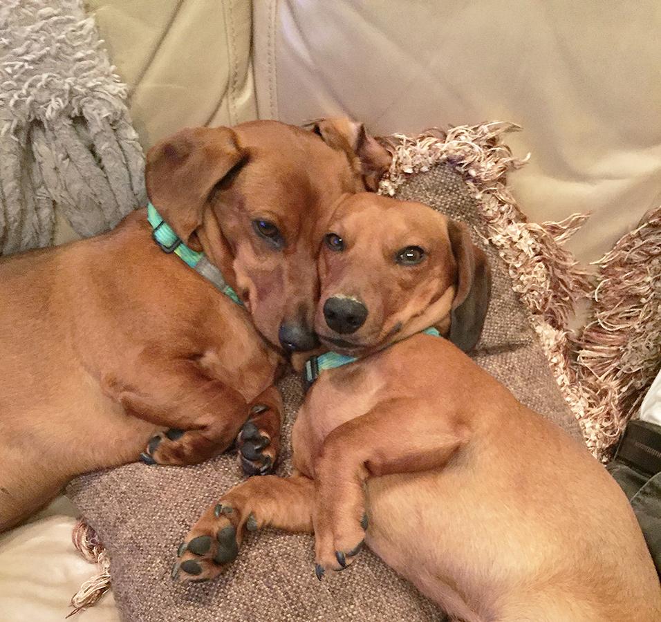 Meet Mack and mario