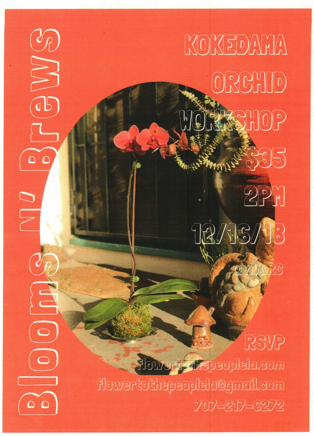 Kokedama Orchid.JPG